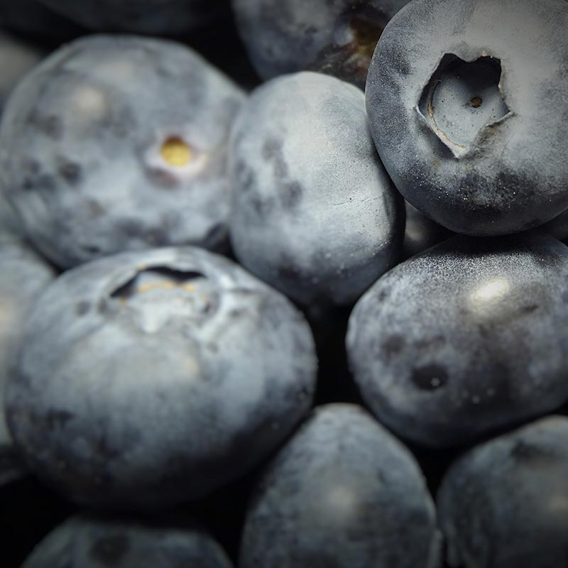 Close up of juicy blueberries grown by The Summer Berry Company