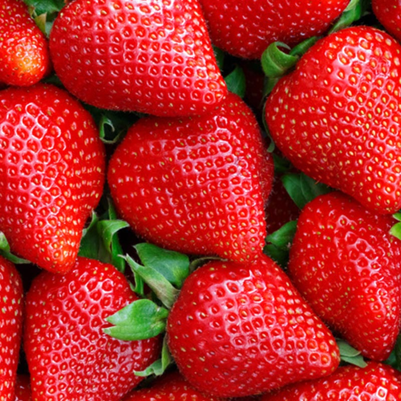 Amazingly vibrant, succulent strawberries grown by The Summer Berry Company